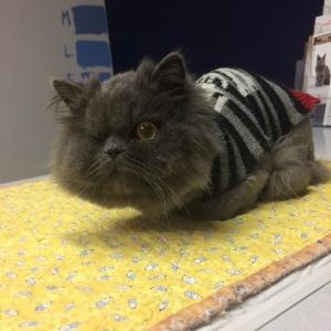 Miss Minion Meow