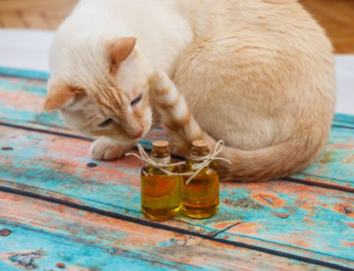 CBD Oil and Pets – The New Cure-all?