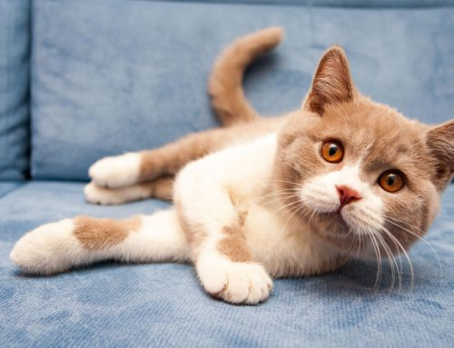 The Five Senses According to Cats: Hearing