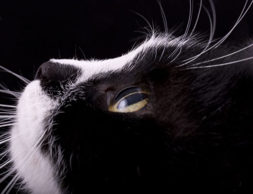 The Five Senses According to Cats: Touch