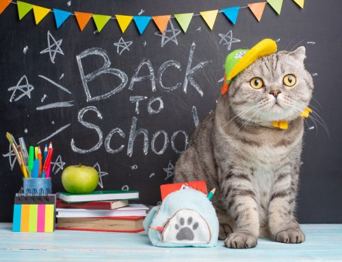 Back to School – For Your Cat?