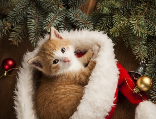 Happy Meowlidays!